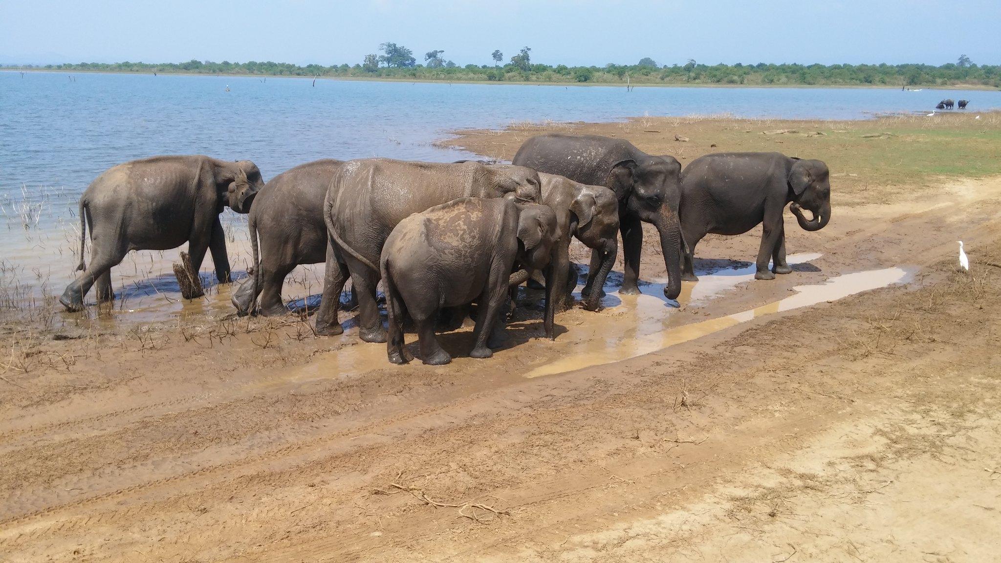 Udawalawe National Park - elephants in sri lanka